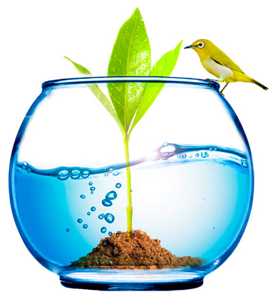 Aquário com planta e pássaro